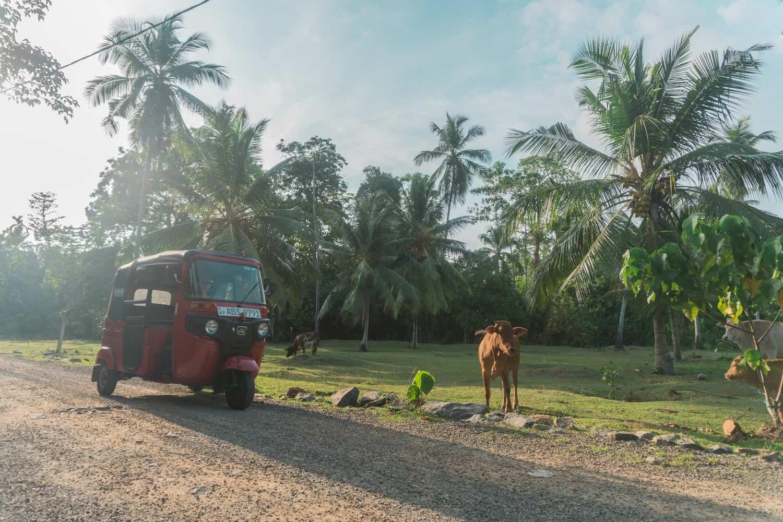 Alugar Tuk Tuk no Sri Lanka - Itinerário