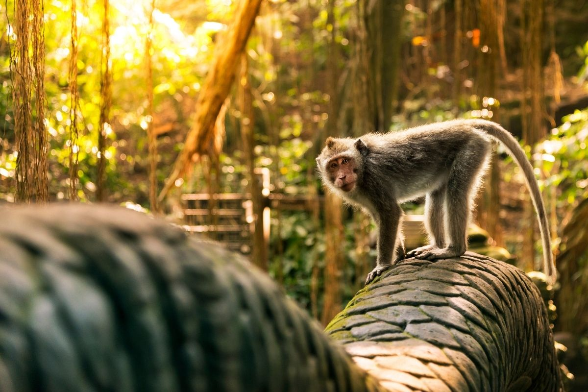 Monkey Forest ubud Bali Indonesia Free Travel Guide by 55Secrets